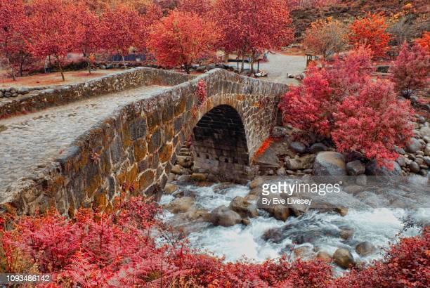 roman bridge & river - castilla y león bildbanksfoton och bilder