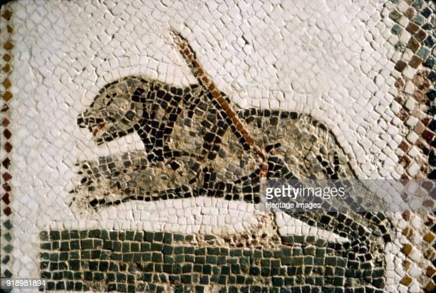 Roman Mosaic detail of Bear, from Diana the Huntress, Thuburbo Majus, Tunisia, c4th century. In general mosaics had a large decorative, often...