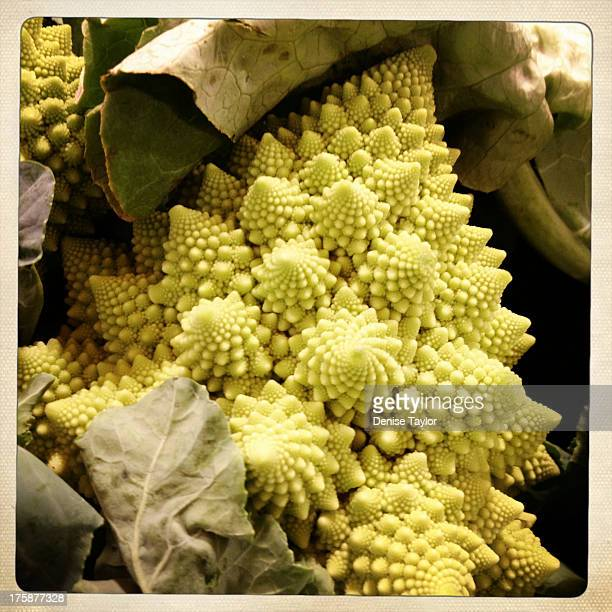 romanesco cauliflower (broccoli)