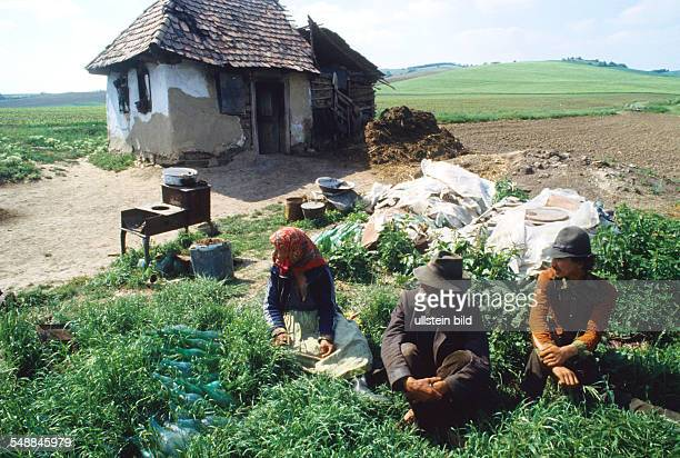 Romania Transilvania Impoverished gipsy in their hut in a village