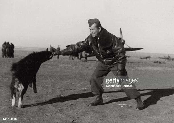 Romanian pilot playing with a nannygoat at a bomber base in the Donetsk area May 1943