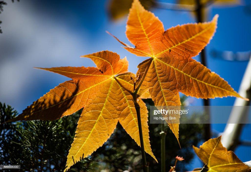Romantic autumn colors... : Stock Photo