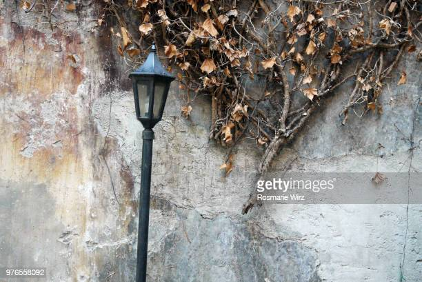 Romantic garden wall with ivy leaves and old wrought iron lantern
