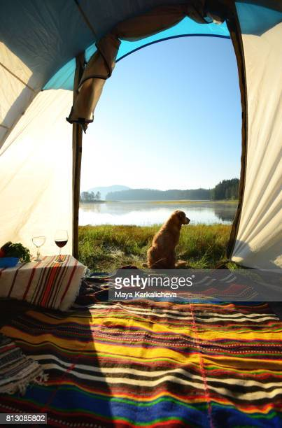romantic golden retriever sitting in front of a tent next to beglika lake - bansko stock pictures, royalty-free photos & images