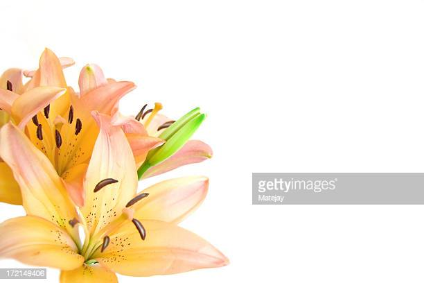 Romantic lilies isolated on white