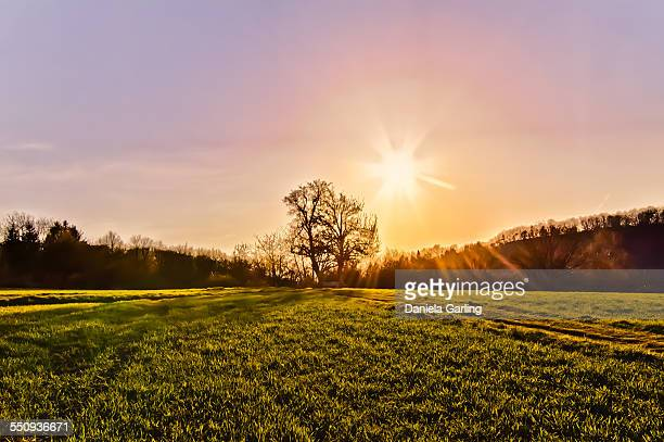Romantic sky and golden grass field with tree