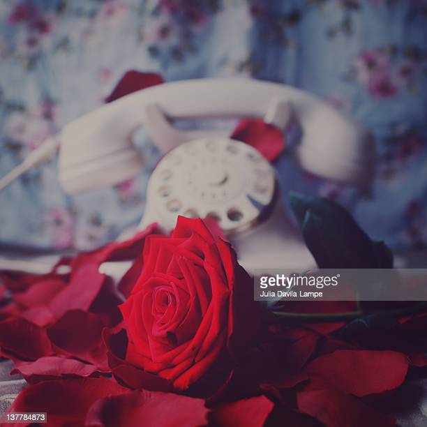 romantic still-life - julia rose stock photos and pictures