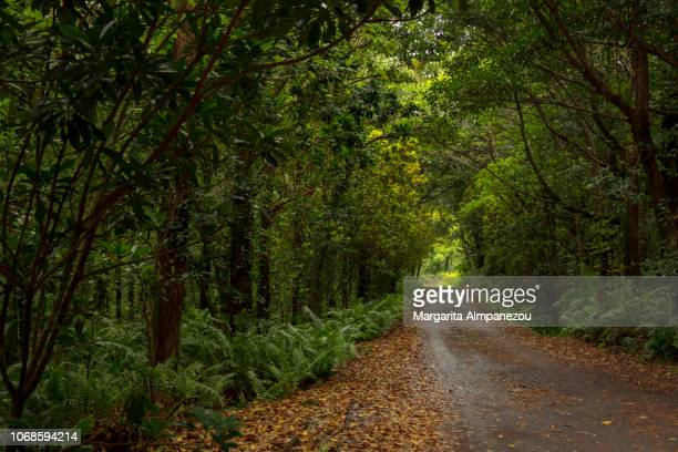 romantic street with autumn leaves under the trees - exotismo fotografías e imágenes de stock