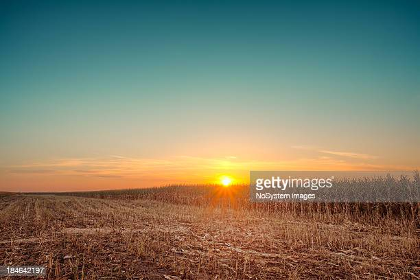 Romantic sunset over the corn fields