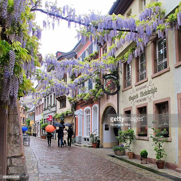 CONTENT] A romantic view of old Freiburg im Breisgau with a huge Wisteria in bloom growing right across the street