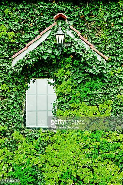 Romantic villa window completely surrounded by green ivy