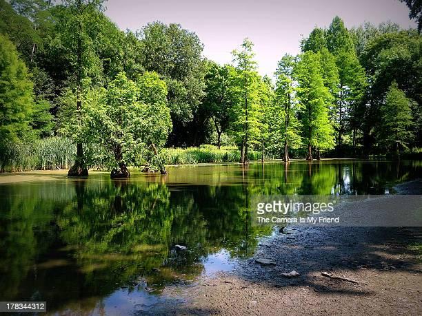 rombergpark - amazing waterworld - dortmund stock pictures, royalty-free photos & images