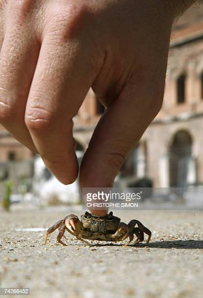 TO GO WITH AFP STORY BY KATIA DOLMADJIAN Massimiliano Scalici zoology student from the University of Rome III works studying freshwater crabs Potamon...