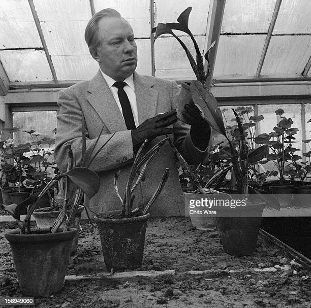 L Ron Hubbard writer of science fiction and founder of the Church of Scientology in the greenhouse of his Sussex mansion Saint Hill Manor December...