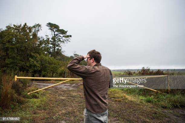 Ron Sutherland Conservation Scientist with Wildlands Network looks for Red Wolves at an area where he saw foot prints inside the Alligator River...