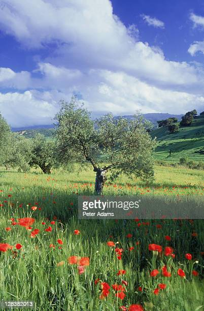 n ronda, andalucia, spain - peter adams stock pictures, royalty-free photos & images