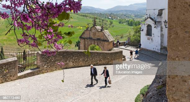 Ronda, Malaga Province, Andalusia, southern Spain. Springtime blossom in the old town.