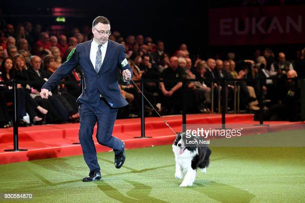 Roo a Border Collie dog and owner David Connolly enter the ring to be judged for Best In Show on day four of the Cruft's dog show at the NEC Arena on...