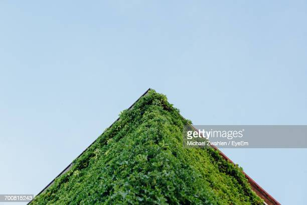 Roof Covered With Plants Against Clear Sky