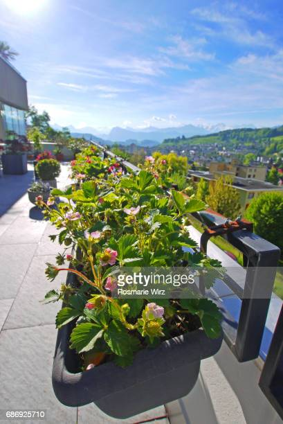 Roof terrace with flower boxes
