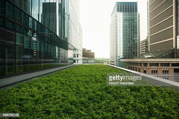 roof top garden - conservazione ambientale foto e immagini stock
