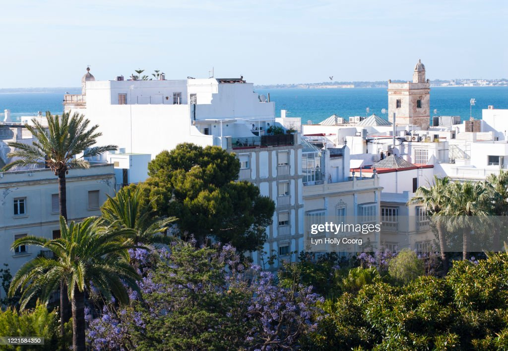 Rooftop view over Old town of Cadiz with views of palms and sea : Stock Photo