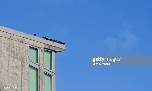 rookery - rookery building stock pictures, royalty-free photos & images