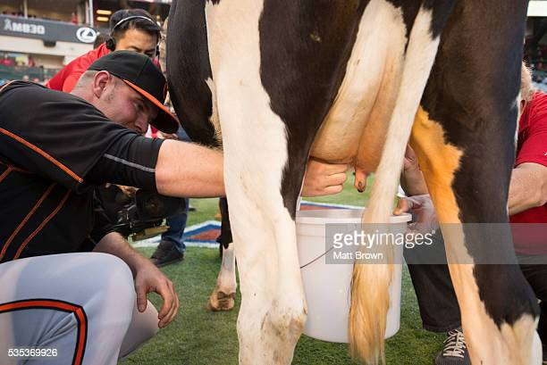Rookie pitcher Dylan Bundy of the Baltimore Orioles competes in the annual Dairy Night rookie cowmilking contest before the game against the Los...