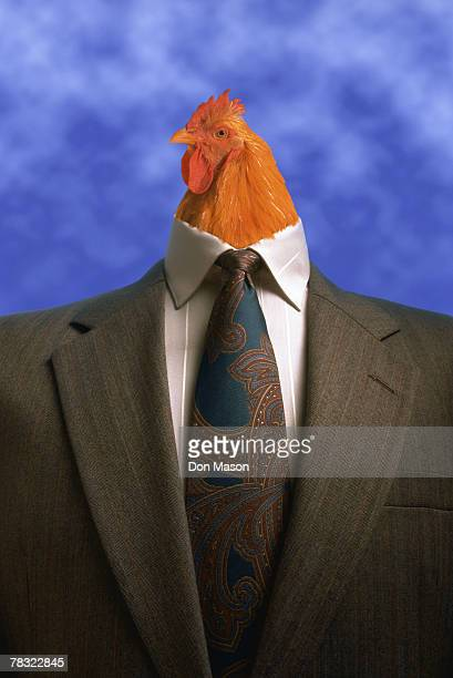 rooster in business attire - funny rooster stock photos and pictures