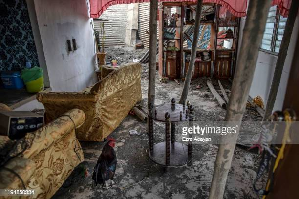 A rooster is seen tied to a table inside a living room of a house whose roof has collapsed due to heavy volcanic ash from Taal Volcano's eruption on...