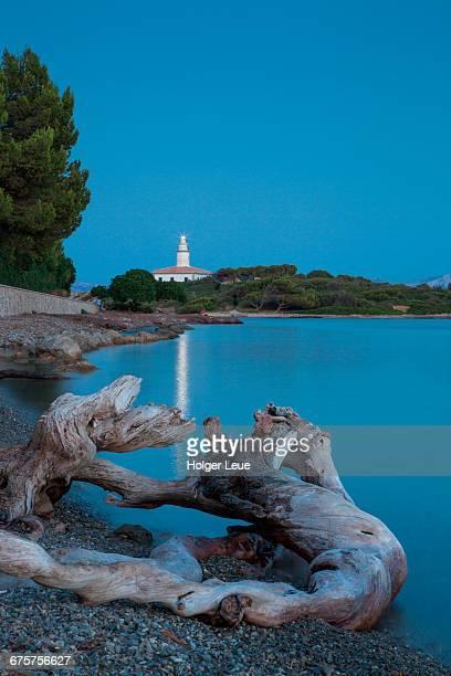 Root on beach with Faro de Alcanada lighthouse