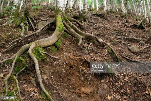 Pfad-Root