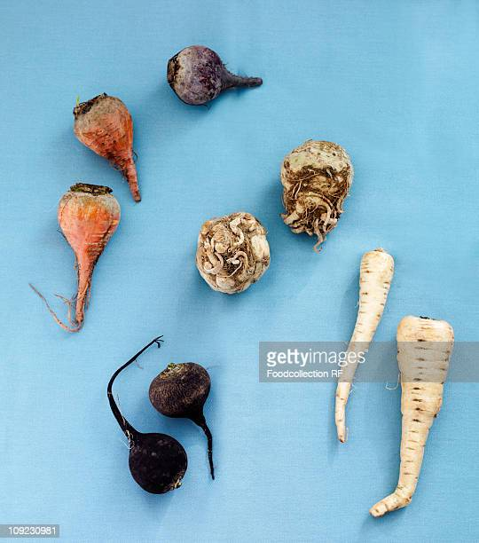 Root vegetable on blue background, close-up