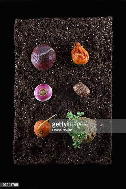 Root Vegetables on Dirt