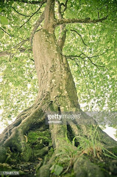 Sportlicher tree