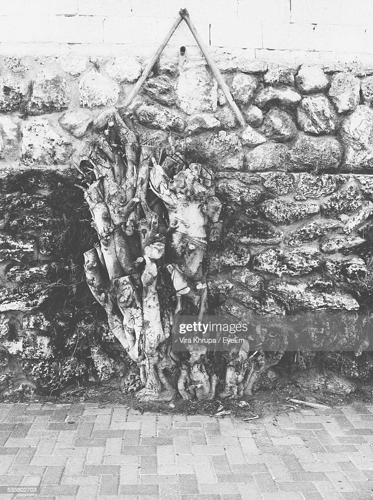 Roots Growing On Wall : Foto stock