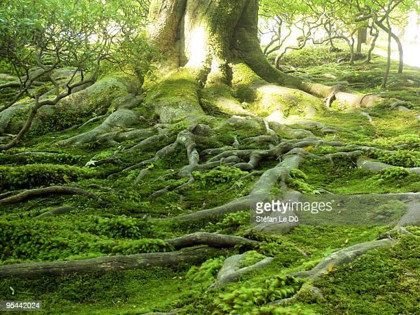 Roots network - Ginkakuji