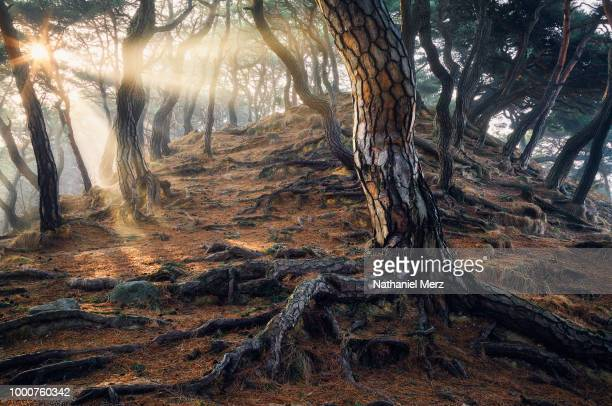 roots of time - nathaniel woods stock pictures, royalty-free photos & images