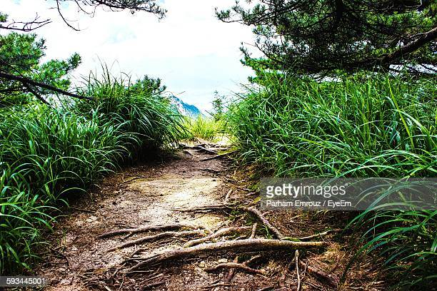 roots on footpath amidst plants in forest - parham emrouz stock pictures, royalty-free photos & images
