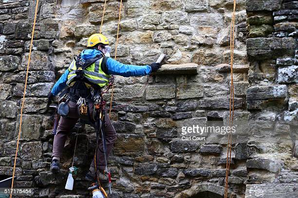 Rope access conservation specialist Jack Pardoe works on the restoration of part of Battle Abbey on February 3 2016 in Battle United Kingdom The...