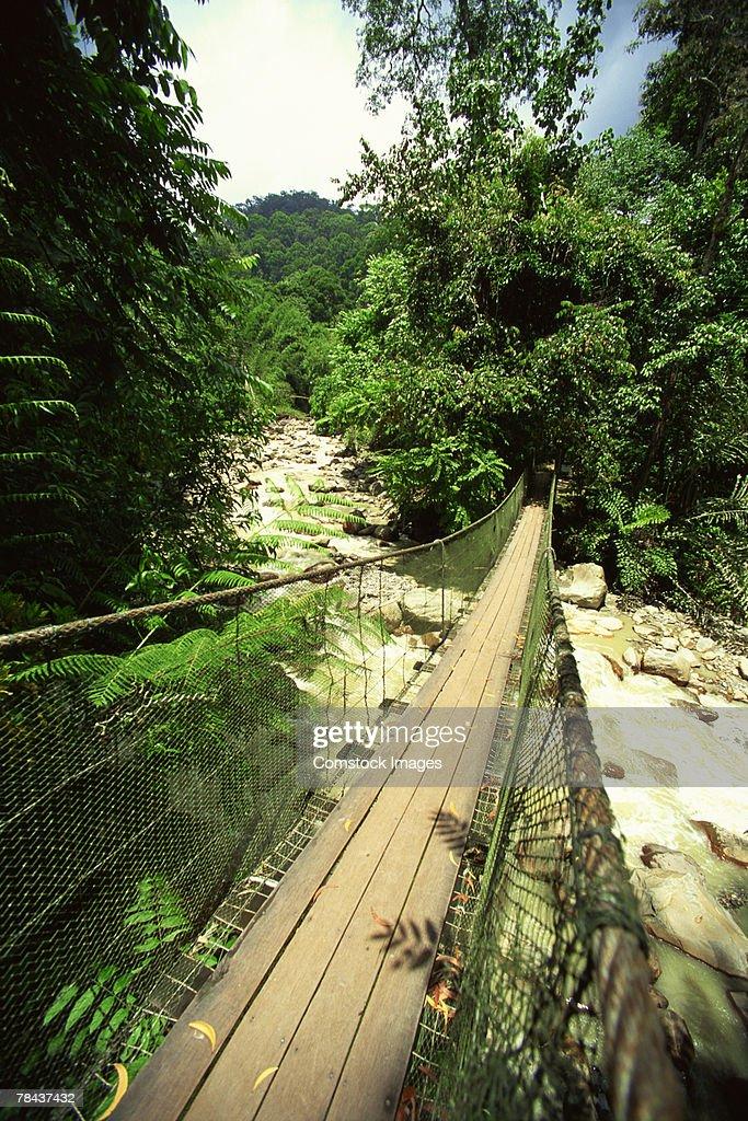 Rope bridge in rainforest : Stockfoto