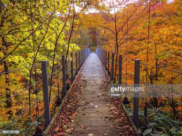 Rope Bridge to Autumn