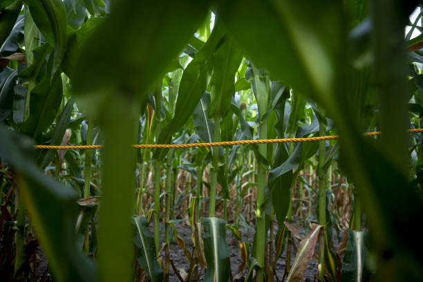 IL: U.S. Crop Conditions Are 'Hit Or Miss' As Tour Kicks Off