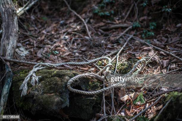 A rope remains at the scene of an apparent suicide in Aokigahara forest on March 13 2018 in Fujikawaguchiko Japan Aokigahara forest lies on the on...