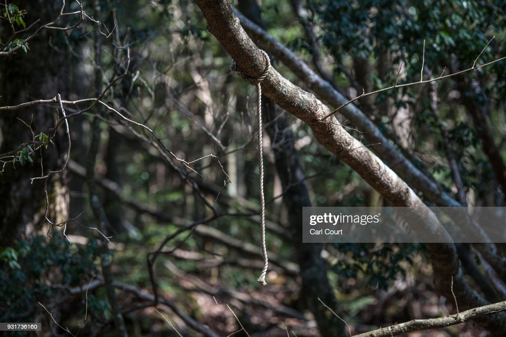 A rope remains tied to a tree at the scene of an apparent suicide in Aokigahara forest, on March 13, 2018 in Fujikawaguchiko, Japan. Aokigahara forest lies on the on the northwestern flank of Mount Fuji and in recent years has become known as one of the world's most prevalent suicide sites. The density of the forest is believed to be a contributing factor with people often tying string to trees to find their way back to a path in case they change their mind. In 2010, officials recorded more than 200 attempted suicides in the forest with attempts said to increase during the end of the Japanese fiscal year. In recent years, local officials have stopped publicising the numbers in an attempt to decrease Aokigahara's association with suicide.