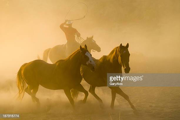 Roping cowboy, arm raised,chasing two horses-backlit dust