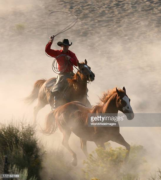 roping one of the herd - uncultivated stock pictures, royalty-free photos & images