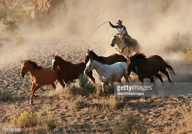 roping wild mustang at dawn - lasso stockfoto's en -beelden