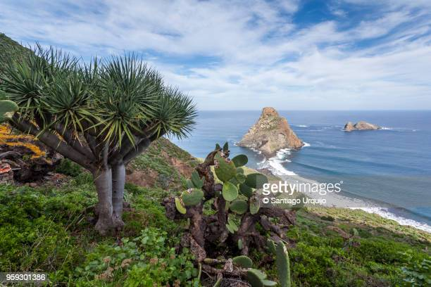 roques de anaga - tenerife stock pictures, royalty-free photos & images