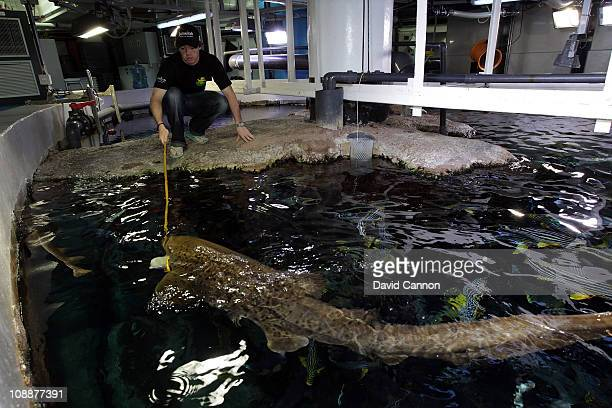 Rory McIlroy of Northern Ireland feeding a Leopard Shark in the Aquarium in Burj Al Arab managed by Jumeirah as a preview for the 2011 Omega Dubai...
